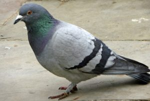 Latest Google Algo Change Hits Local: Pigeon