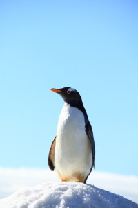 Pending Penguin Update – Is Your Site Ready?